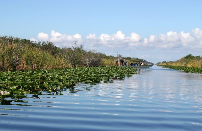 болотистые низменности airboat стоковое фото rf