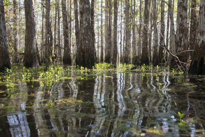 Болото в болотистых низменностях 2 стоковые фотографии rf