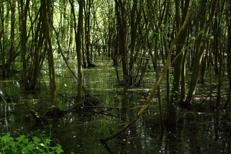 Болото в национальном парке Langdonken в Бельгии стоковая фотография rf