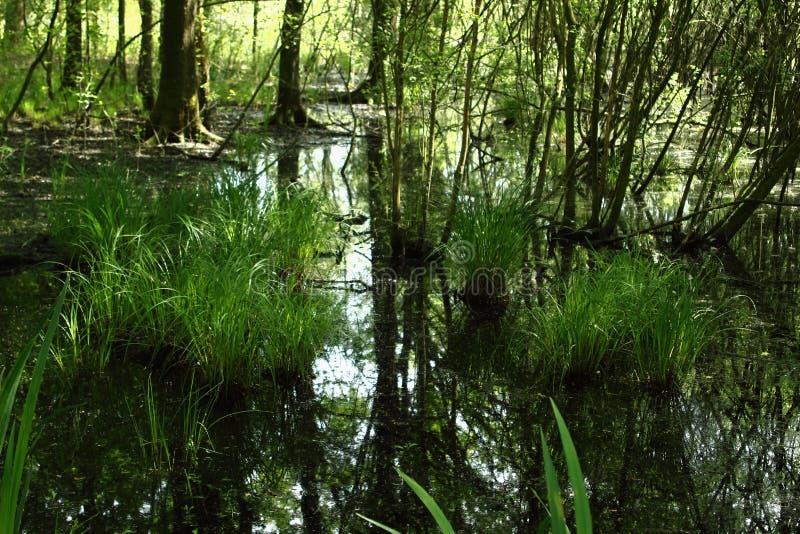 Болото в национальном парке Langdonken в Бельгии стоковое фото