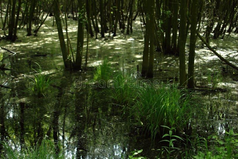 Болото в национальном парке Langdonken в Бельгии стоковые фото