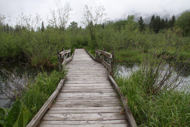 болото земли над дорожкой стоковое изображение rf