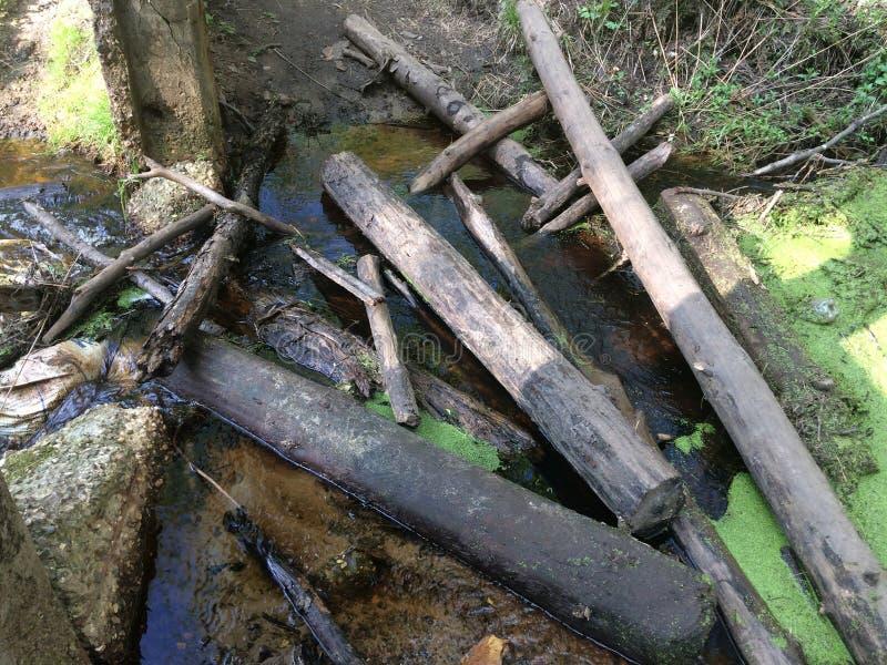 Болото и болото леса трясины весной стоковая фотография rf