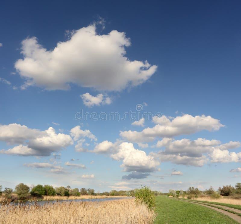 болото ландшафта стоковые изображения