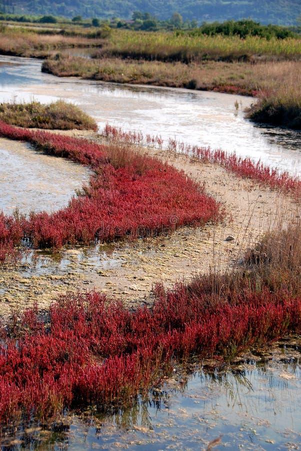болото цветов осени brackish стоковые изображения rf