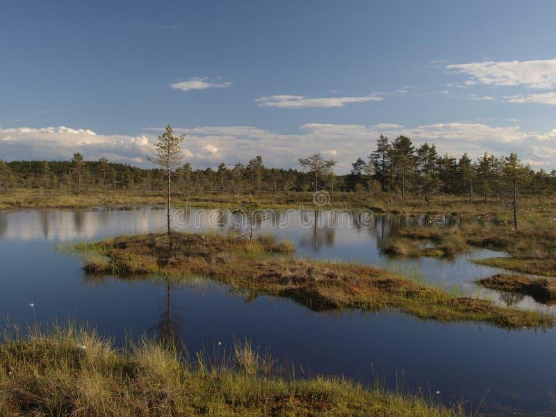 болото hags стоковое фото rf