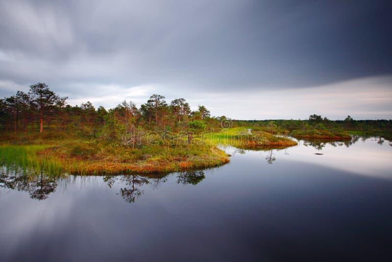 болото hags стоковое изображение rf
