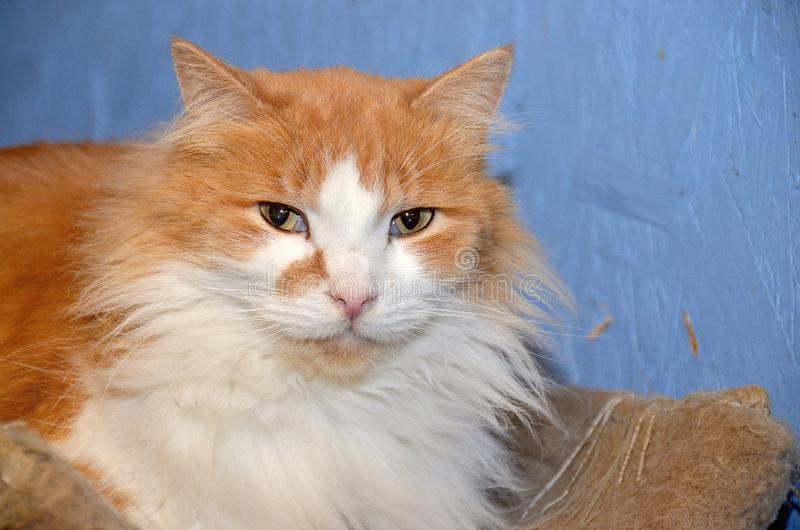 Больной кот с жидким носом стоковая фотография