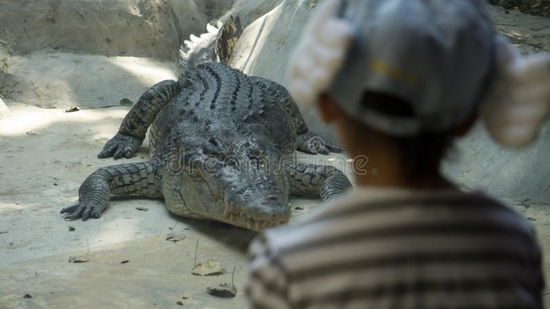 Большая Азия Cocrodile с маленькой девочкой в зоопарке стоковая фотография