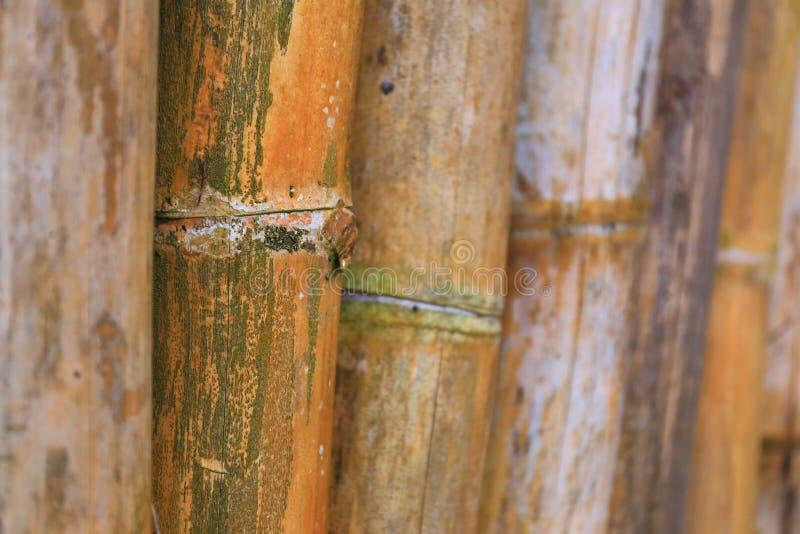 Большая бамбуковая предпосылка стоковые изображения rf