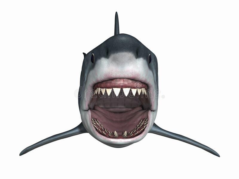 большая белизна акулы иллюстрация штока