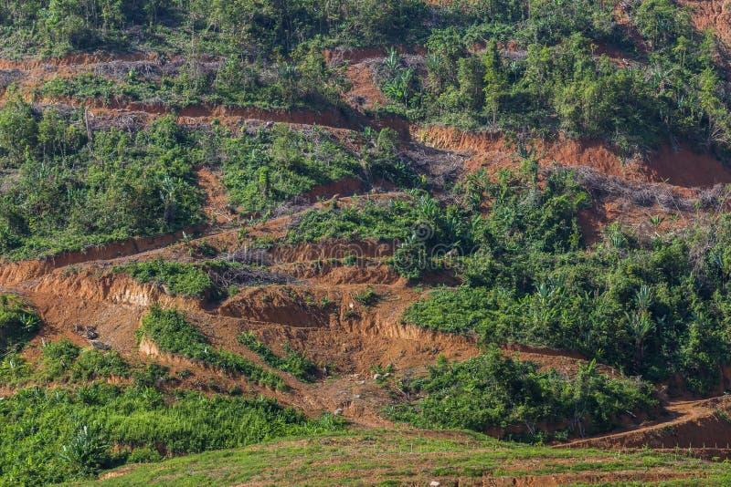 Большая горная область отрезок дерева для растет плантации масличной пальмы, обезлесение стоковые фото