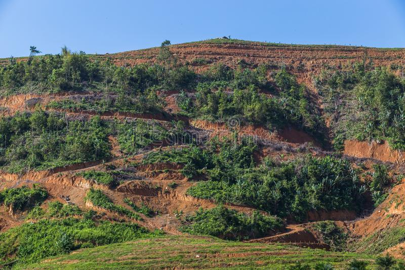 Большая горная область отрезок дерева для растет плантации масличной пальмы, обезлесение стоковые изображения