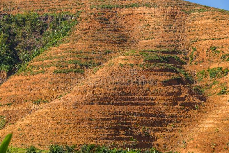 Большая горная область отрезок дерева для растет плантации масличной пальмы, обезлесение стоковое изображение