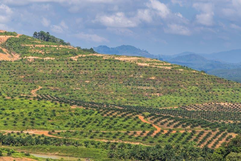 Большая горная область отрезок дерева для растет плантации масличной пальмы, обезлесение стоковое фото