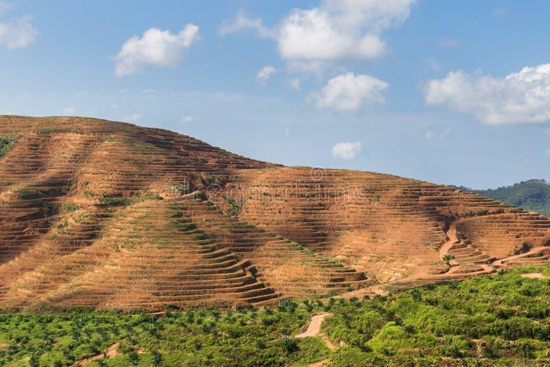 Большая горная область отрезок дерева для растет плантации масличной пальмы, обезлесение стоковые фотографии rf