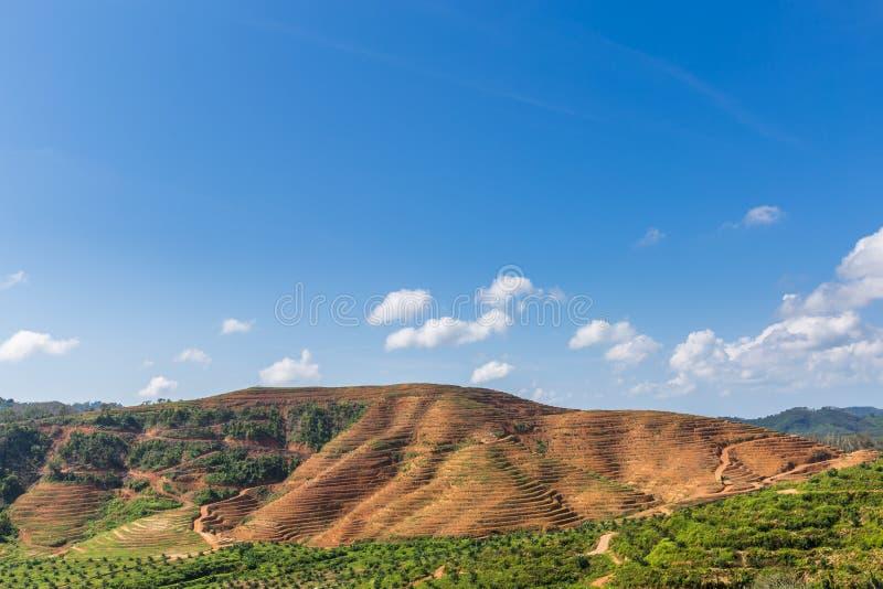 Большая горная область отрезок дерева для растет плантации масличной пальмы, обезлесение стоковая фотография rf