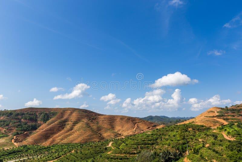 Большая горная область отрезок дерева для растет плантации масличной пальмы, обезлесение стоковое фото rf
