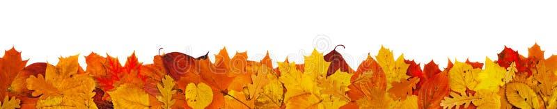 Большая граница листьев стоковые изображения