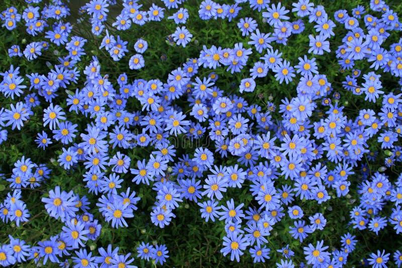 Большая группа в составе голубые lilys стоковое изображение rf