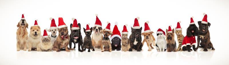 Большая группа в составе прелестные коты и собаки со шляпами santa стоковые изображения rf
