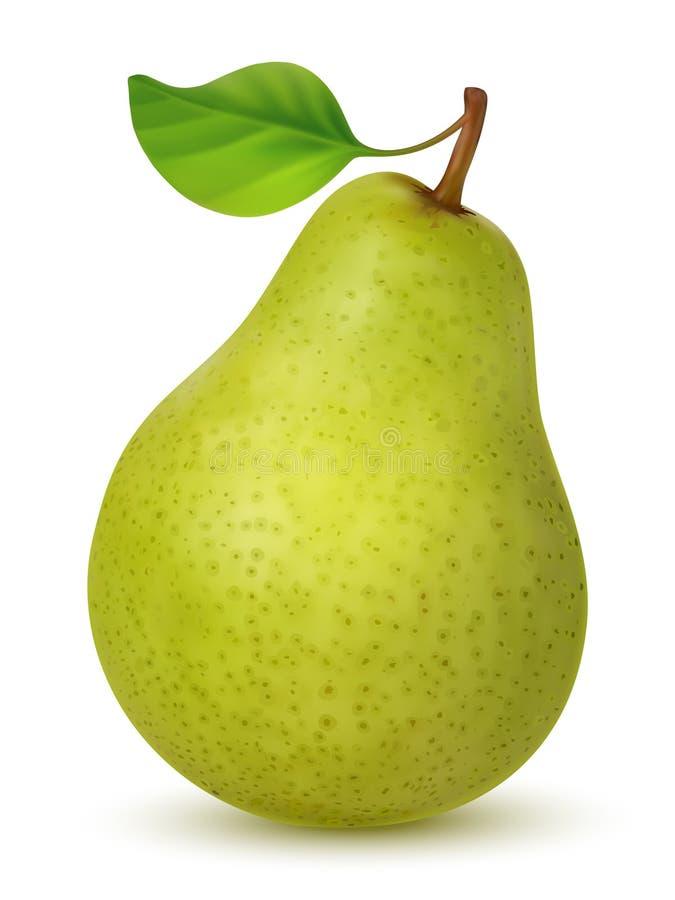 Большая зеленая груша с листьями иллюстрация вектора