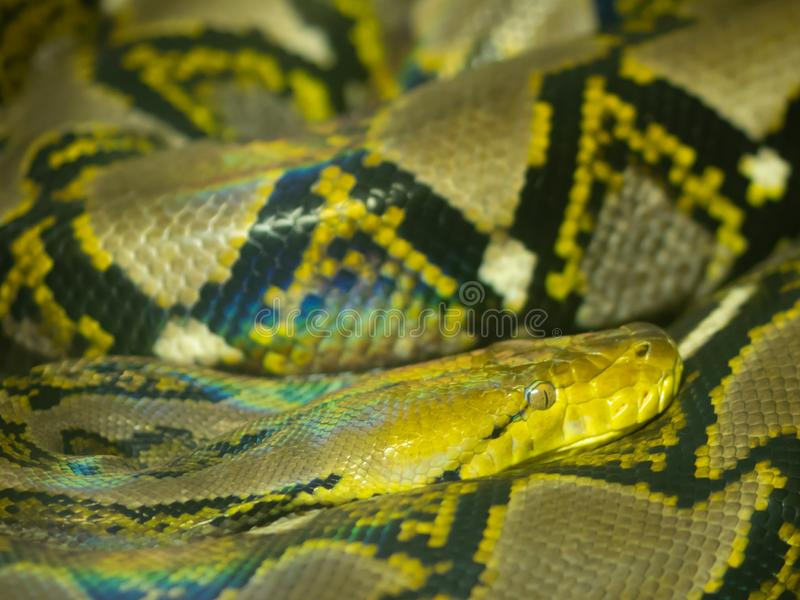 Большая змейка стоковые изображения