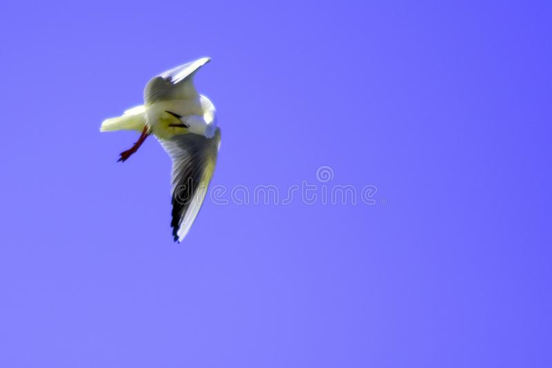 Большая птица в голубом небе лета стоковое изображение rf