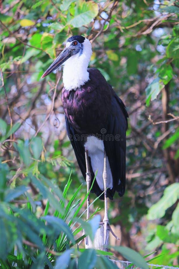 Большая птица стоковое фото rf