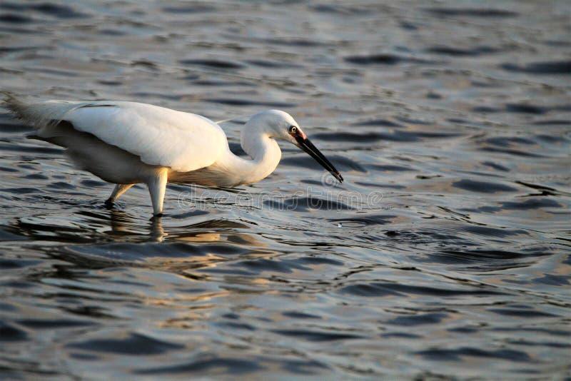 Большая птица стоковая фотография rf