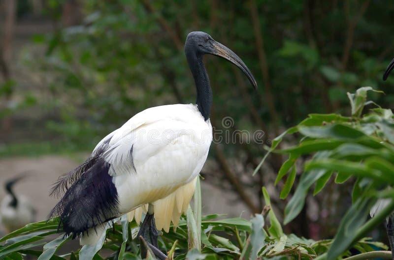 большая птица стоковое изображение rf