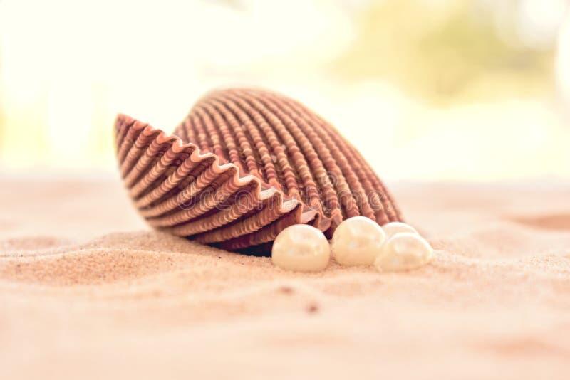 Большая раковина куколя с жемчугами на песчаном пляже стоковое фото