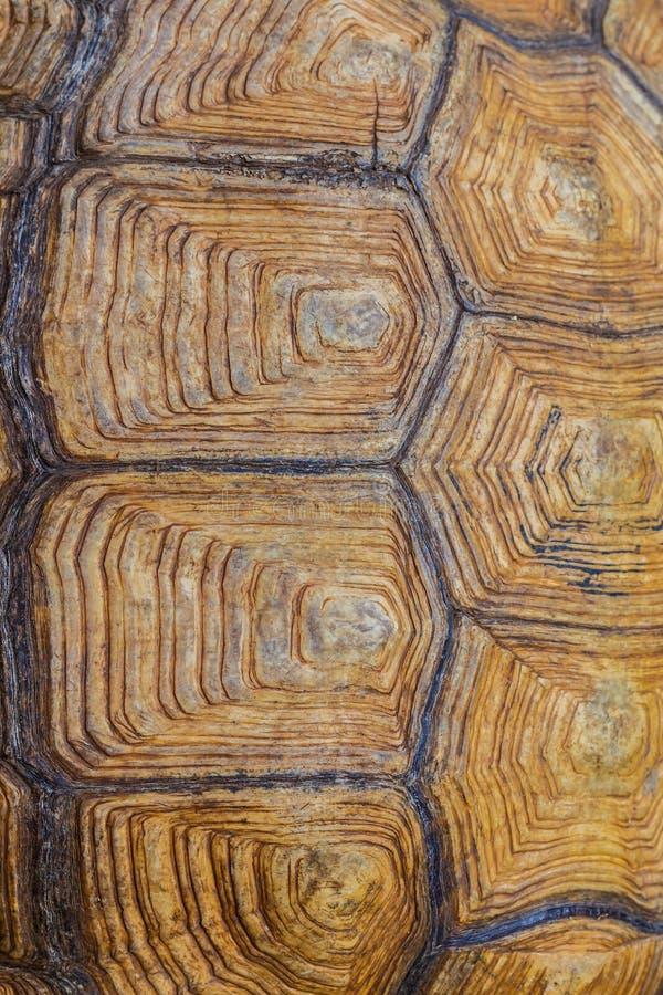 Большая текстура раковины черепахи красивая стоковое фото rf