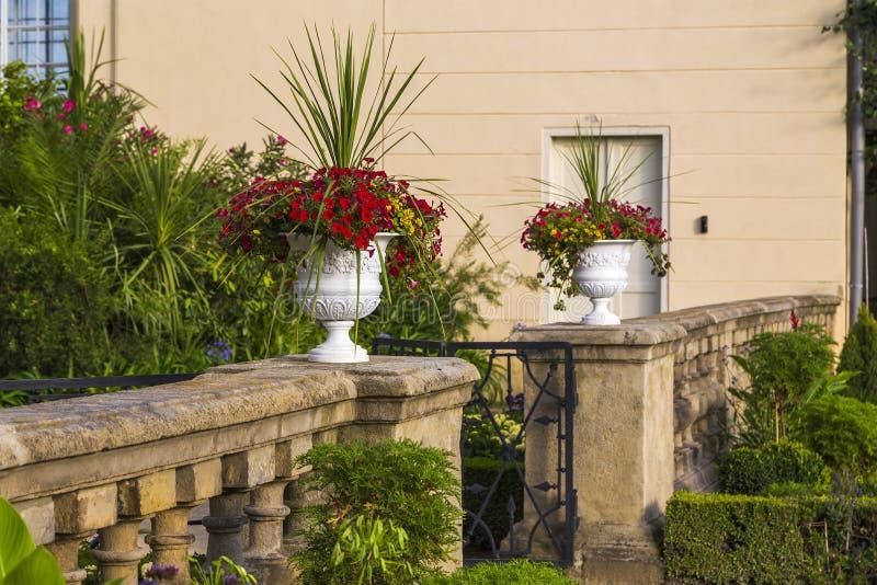 Большие вазы сада с цветками стоковые фотографии rf