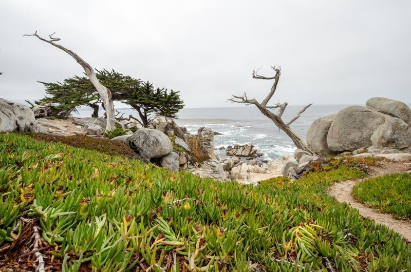 Большие валуны с twisty деревом cypruss вдоль скалистой береговой линии Калифорния около Монтерей и большого Sur, на хмуром overc стоковая фотография rf