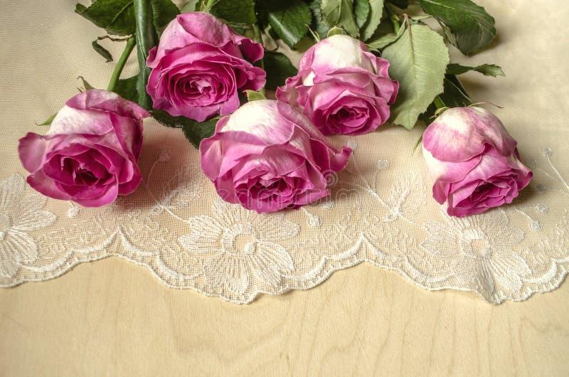 Большие великолепные розы с лепестками, покрашенной белизной с пинком вокруг края, лежа поверх openwork ткани стоковые фотографии rf