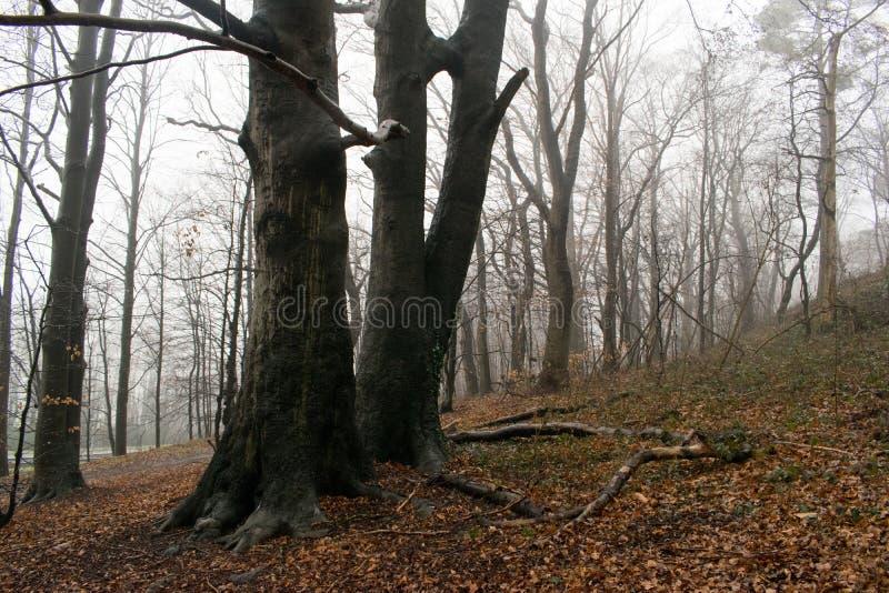 Большие деревья в лесе стоковое фото
