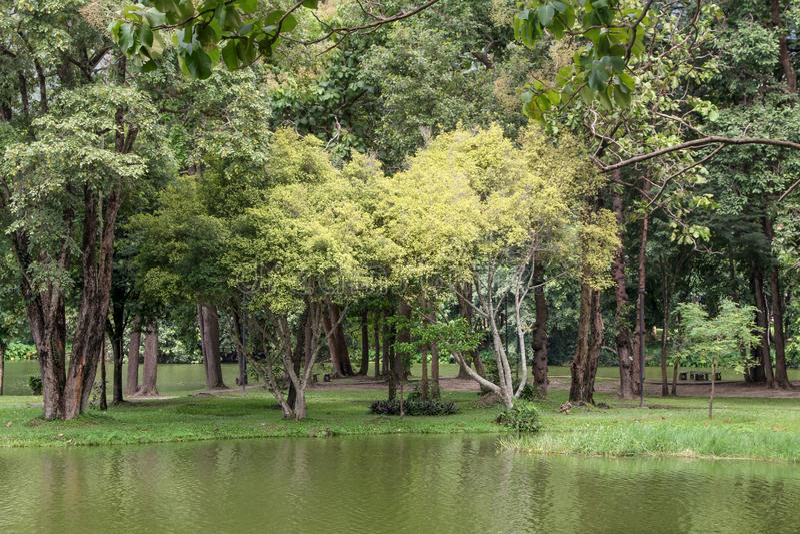 Большие деревья в парке окруженном водой стоковые фото