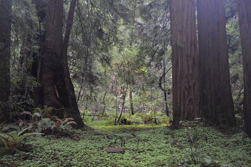 Большие деревья против леса стоковые изображения