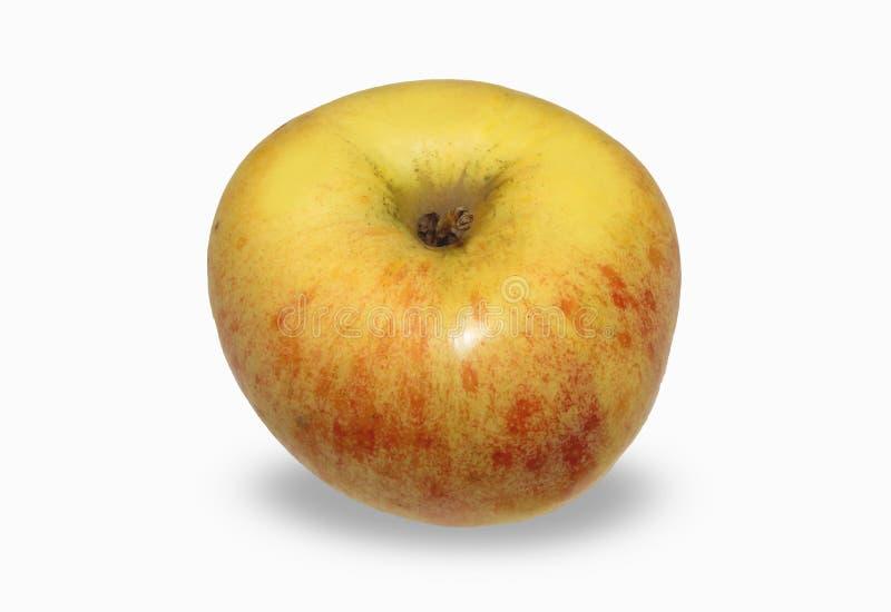 Большие желтые, красные яблоки изолированные на белой предпосылке стоковое фото rf