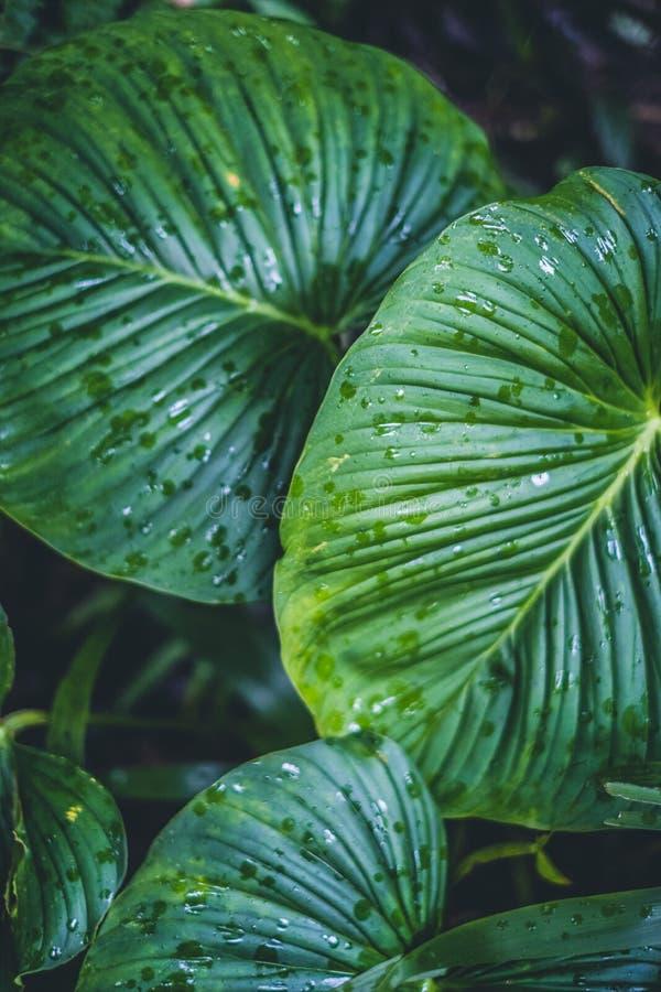 Большие зеленые листья, вид сверху стоковое изображение