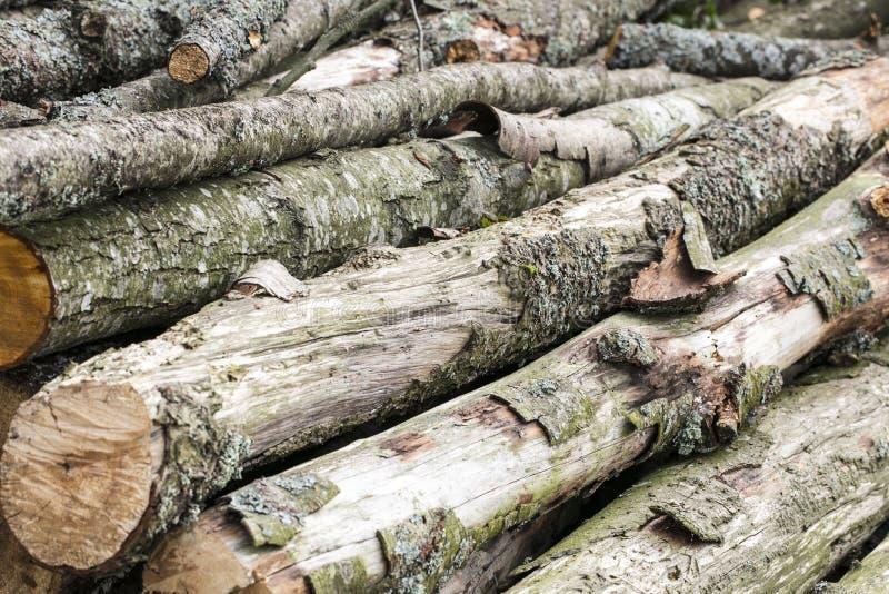 Большие куски дерева, швырок на зима стоковые изображения rf
