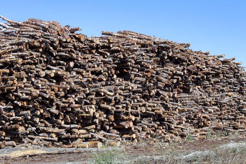 Большие кучи отрезанных стволов дерева стоковые фотографии rf