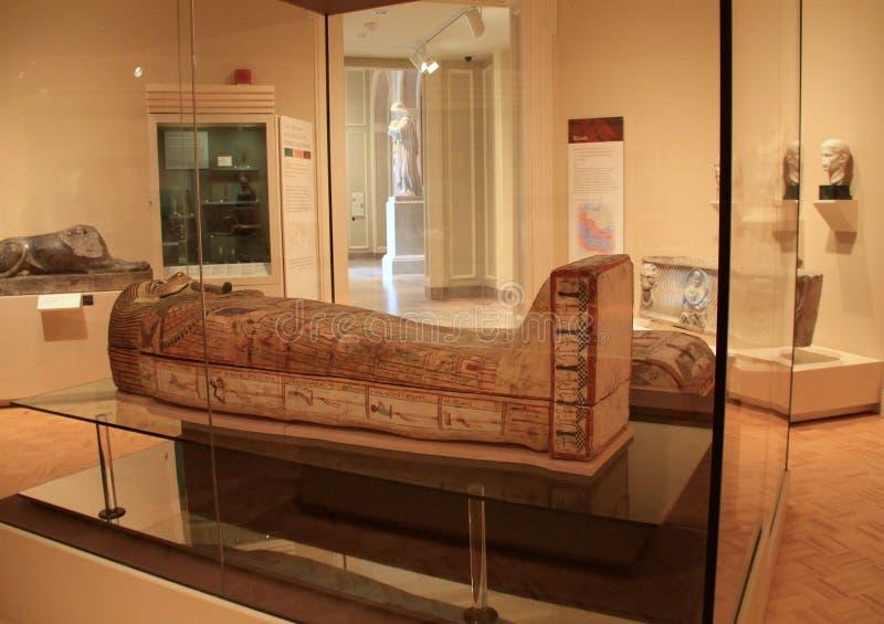 Большие мумии установили в стеклянные случаи, увиденные в одной из много комнат, мемориальная художественная галерея, Rochester,  стоковые изображения