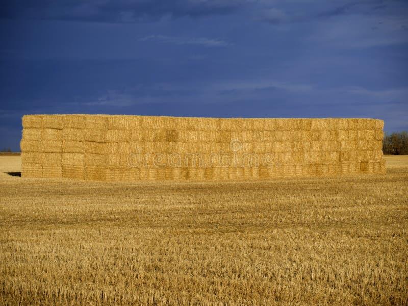 Большие связки сена в стоге против темного неба стоковое фото rf