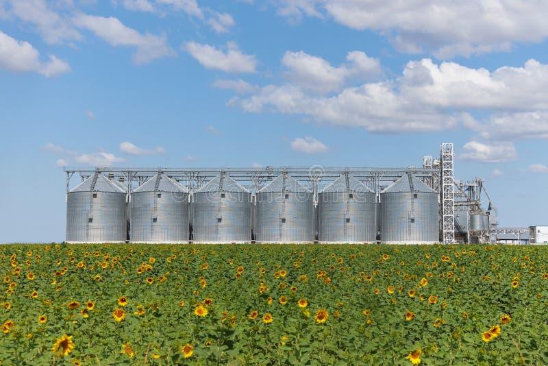 Большие современные лифт, зернохранилище и поле пшеницы с зацветая солнцецветом против голубого неба стоковое изображение
