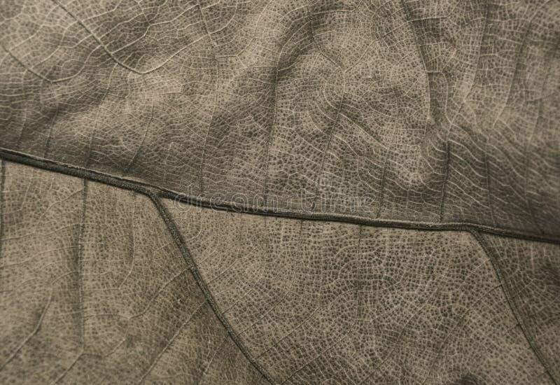 Большие сухие лист пальмы стоковое фото