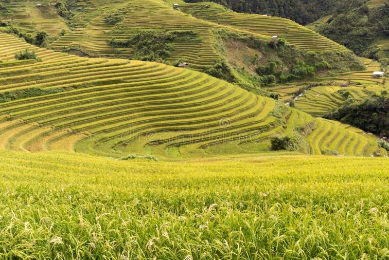Большие террасные поля в Sapa или Ha Giang Вьетнаме стоковая фотография