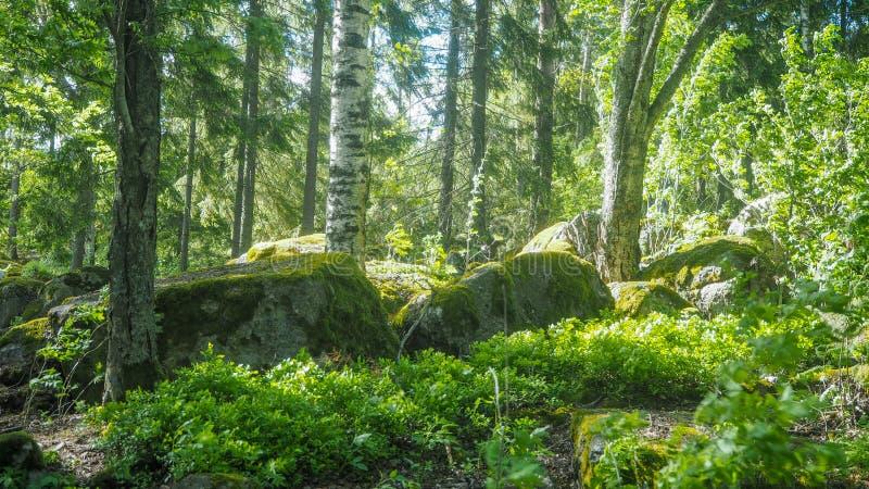 Большие утесы в середине леса стоковая фотография rf