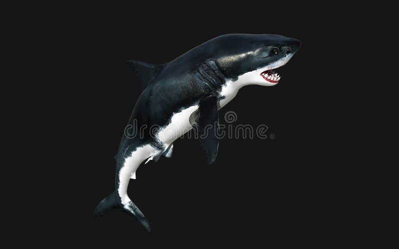 Больший изолят белой акулы на черной предпосылке с путем клиппирования бесплатная иллюстрация